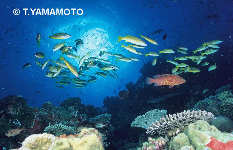 健全なサンゴ礁に集まる様々な魚たち(オーストラリア・グレートバリアリーフ)