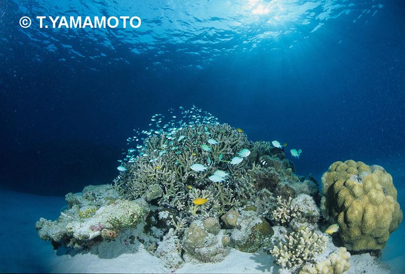 ガラスのように透き通った海(沖縄・慶良間諸島)