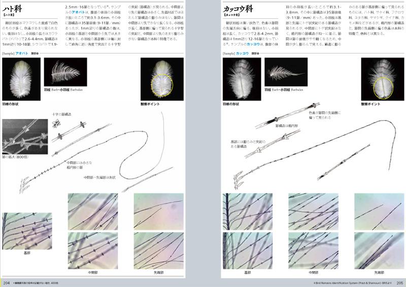 写真協力:藤井 幹、文一総合出版