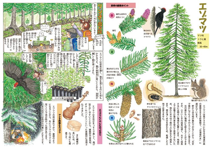 写真&イラスト 協力:林野庁 北海道森林管理局、平田美紗子