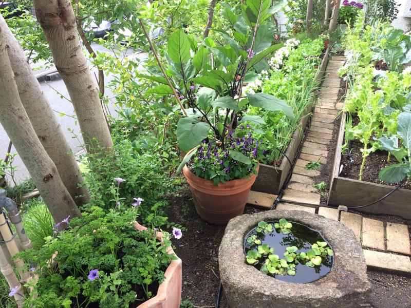 はた家の庭先菜園